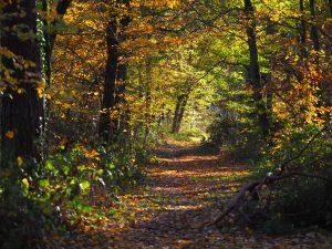 Die Herbstfärbung hat bereits eingesetzt und zaubert eine wunderschönes Bild
